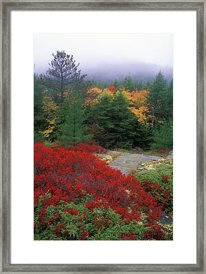 Acadia National Park Foliage Framed Print by John Burk