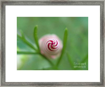 Accelerating Acceptance Photography Framed Print
