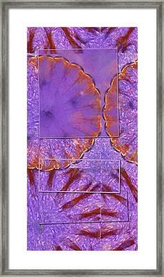 Accorder Design Flower  Id 16164-191843-35961 Framed Print by S Lurk