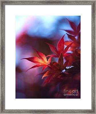 Acer Kaleidoscope Framed Print