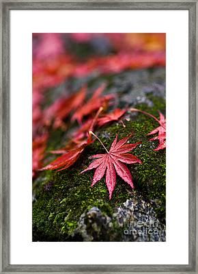 Acers Fallen Framed Print by Mike Reid