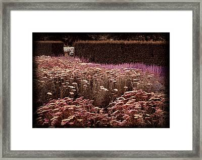 Framed Print featuring the digital art Achillea by Margaret Hormann Bfa