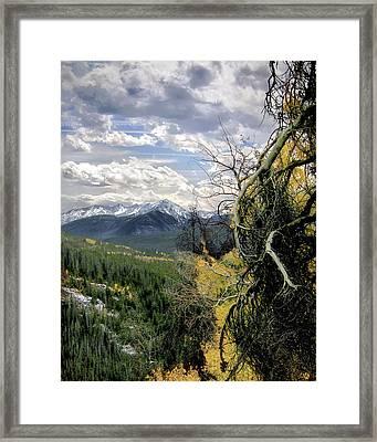 Acorn Creek Trail Framed Print