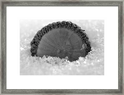 Acorn Framed Print by Shawn Wood