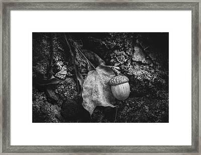 Acorn Framed Print by Tom Mc Nemar