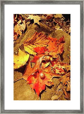 Framed Print featuring the photograph Acorns Fall Maple Leaf by Meta Gatschenberger
