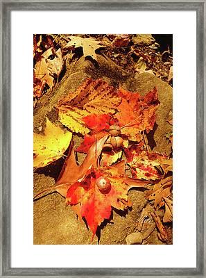 Acorns Fall Maple Leaf Framed Print
