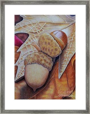 Acorns Framed Print
