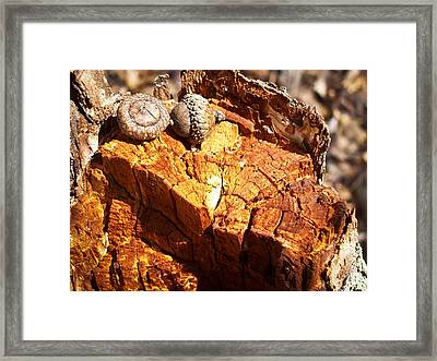 Acorns - The Cycle Of Life Continues  Framed Print