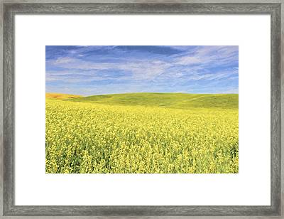Acreage Of Yellow II Framed Print