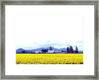 Acres Of Daffodils Framed Print by Will Borden
