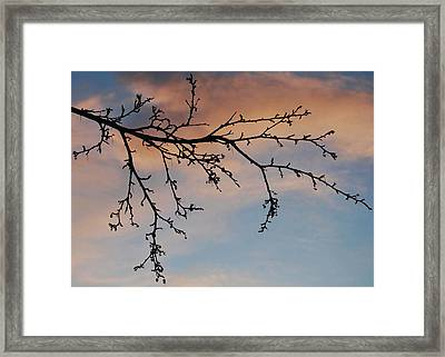 Framed Print featuring the photograph Across A December Sky by Marilynne Bull