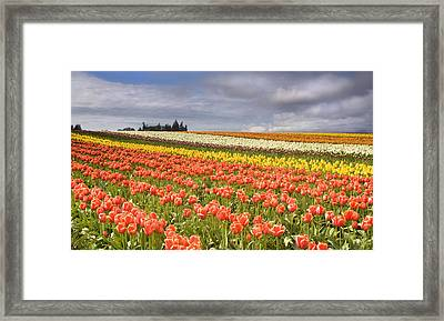 Across Colorful Fields Framed Print by Mike  Dawson