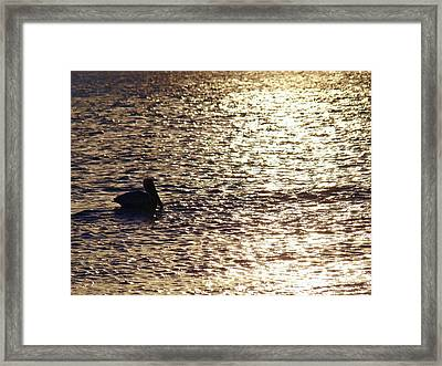 Across The Amber Glow Framed Print