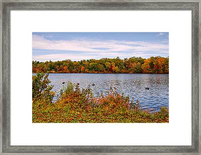 Across The Lake - Lake Carasaljo Framed Print