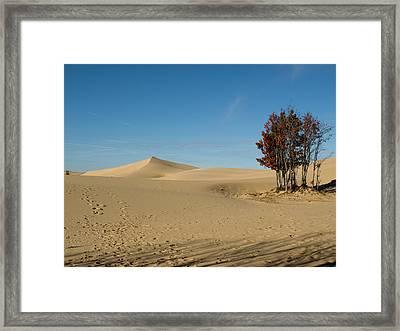 Framed Print featuring the photograph Across The Sand 2 by Tara Lynn