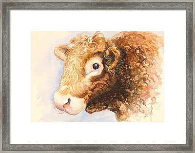 Adam The Bull Framed Print by Alison Cooper