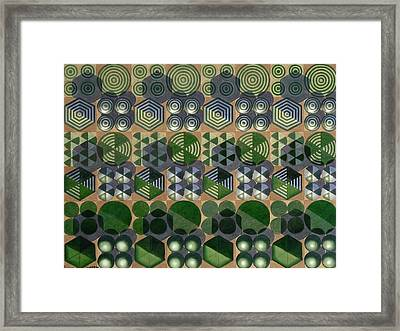 Adapting To The Surroundings Framed Print by Cory Clifford