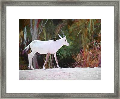 Addax On The Move Framed Print by Judy Kay