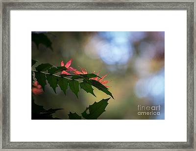 Adding Color To The Holly Framed Print by Mike Reid