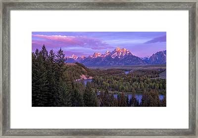 Admiration Framed Print