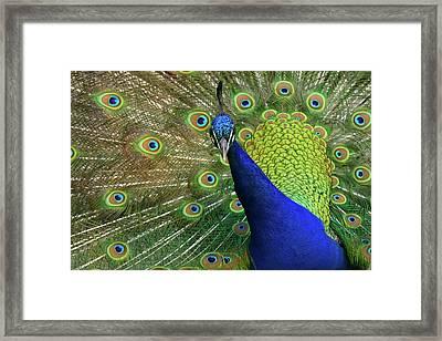 Admiration Framed Print
