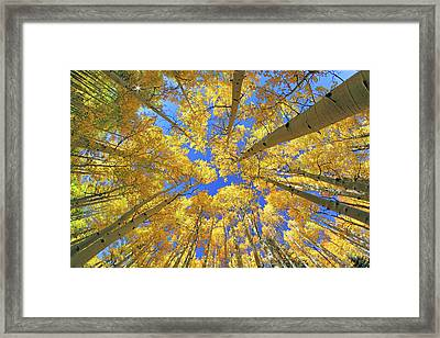 Framed Print featuring the photograph Admiring Aspens - Colorado - Autumn by Jason Politte