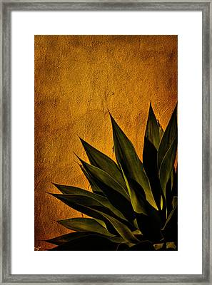 Adobe And Agave At Sundown Framed Print