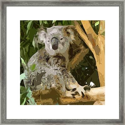 Adonis Koala Framed Print