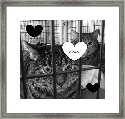 Adopt Framed Print by Mary Ellen Frazee