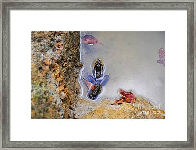 Framed Print featuring the photograph Adopted Amphibian by Al Powell Photography USA