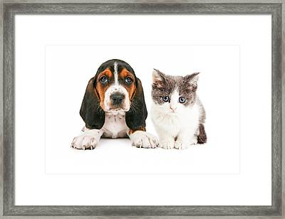 Adorable Basset Hound Puppy And Kitten Sitting Together Framed Print