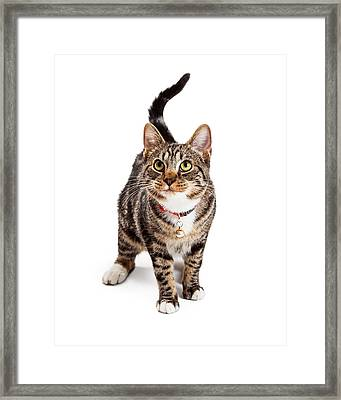 Adorable Bengal Cat With Attentive Expression Framed Print by Susan Schmitz