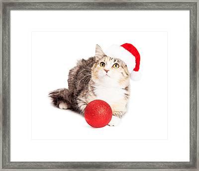 Adorable Calico Christmas Kitten Framed Print by Susan Schmitz