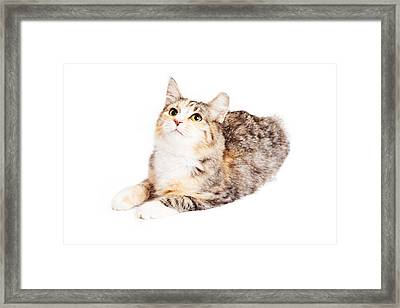 Adorable Calico Kitty Looking Up Framed Print
