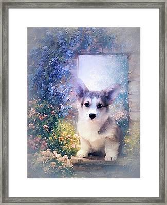 Adorable Corgi Puppy Framed Print