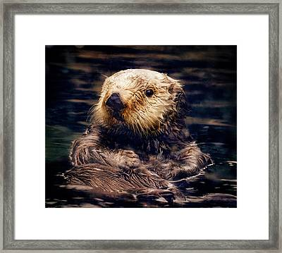 Adorable Sea Otter Framed Print by Jean Noren