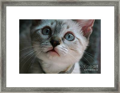 Framed Print featuring the photograph Adorable Kitty  by Kim Henderson