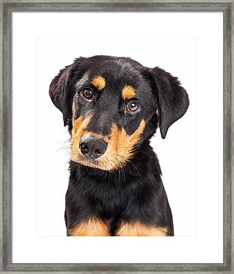 Adorable Rottweiler Crossbreed Puppy Close-up Framed Print by Susan Schmitz