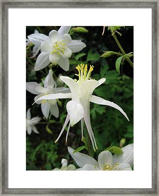 Framed Print featuring the photograph Adoration by Carol Sweetwood