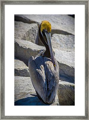 Adore Me Framed Print by Marvin Spates