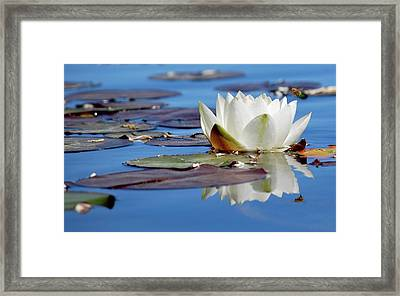Framed Print featuring the photograph Adoring White by Amee Cave