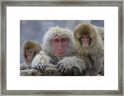 Adult And Two Young Framed Print by Roy Toft