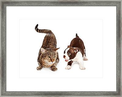 Adult Cat Annoyed With Playful Puppy Framed Print