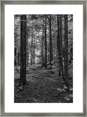 Adventure Awaits Framed Print by Stephen Stookey