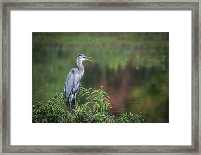 Framed Print featuring the photograph Advice From A Great Blue Heron by Cindy Lark Hartman