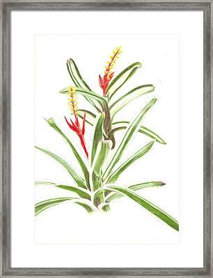 Aechmea Nudicaulis   Framed Print by Penrith Goff