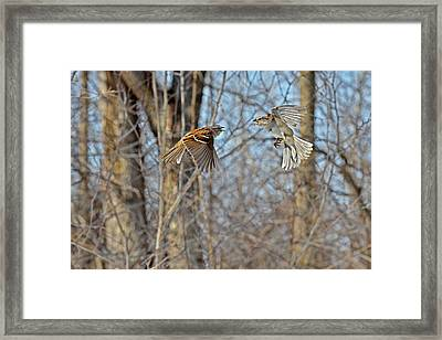 Aerial Battle Of The Forest Framed Print