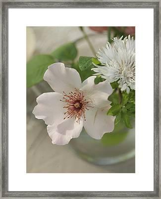 Aerial Close-up Of White Flowers Framed Print