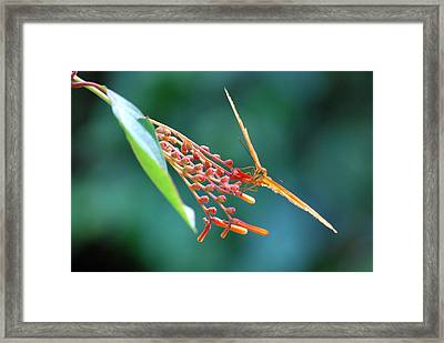 Aerodynamic Framed Print by Teresa Blanton